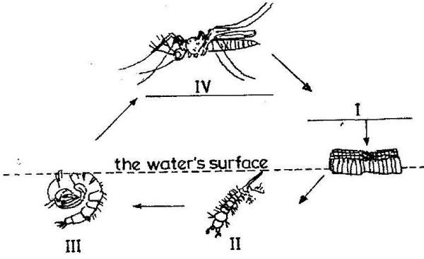 2014-Integrated-Science-paper-2-question-1a-image